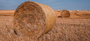 round haystack of straw on the field